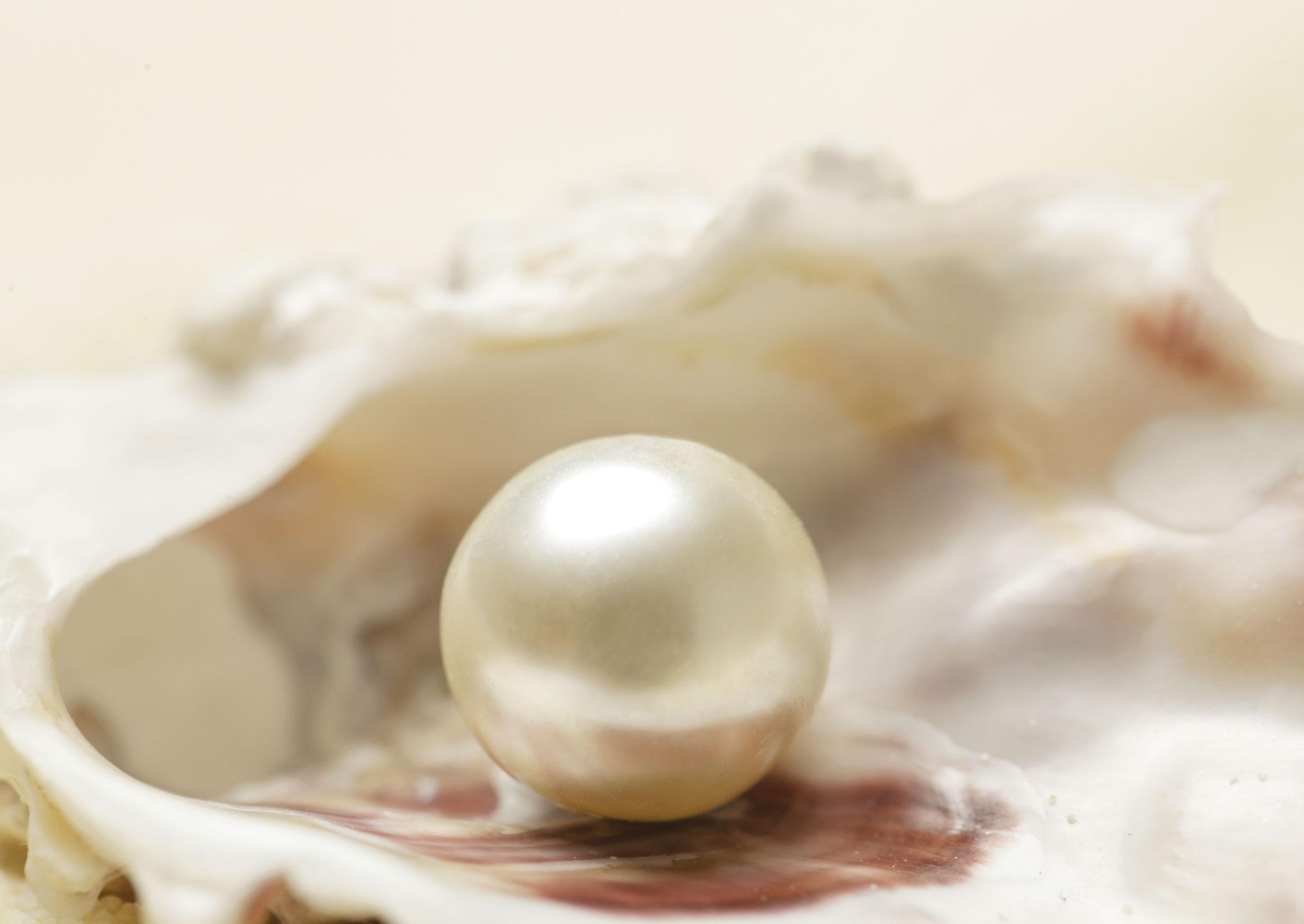 Coquillage et perle de luxe